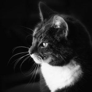 cat-paws (1)
