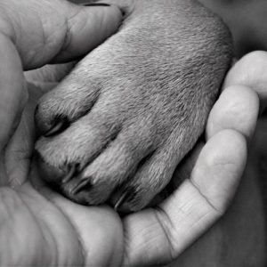 hand-andpaw