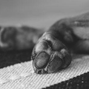 paws-prints